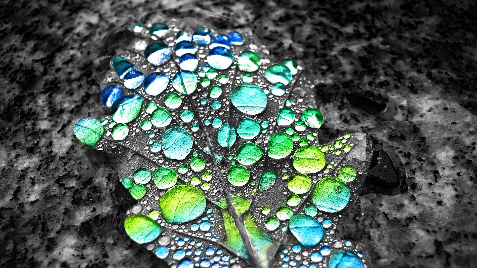 Psychedelic Wallpaper Hd Selective Coloring Water Drops Leaves Hd Wallpapers