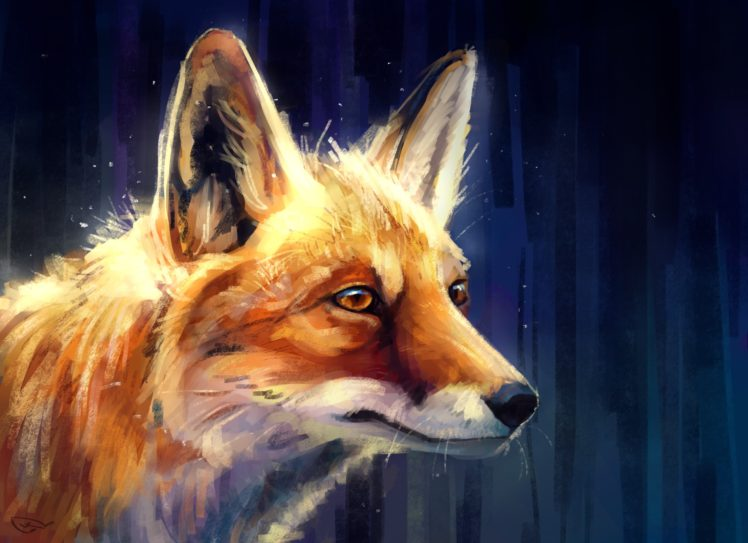 fox animals hd wallpapers
