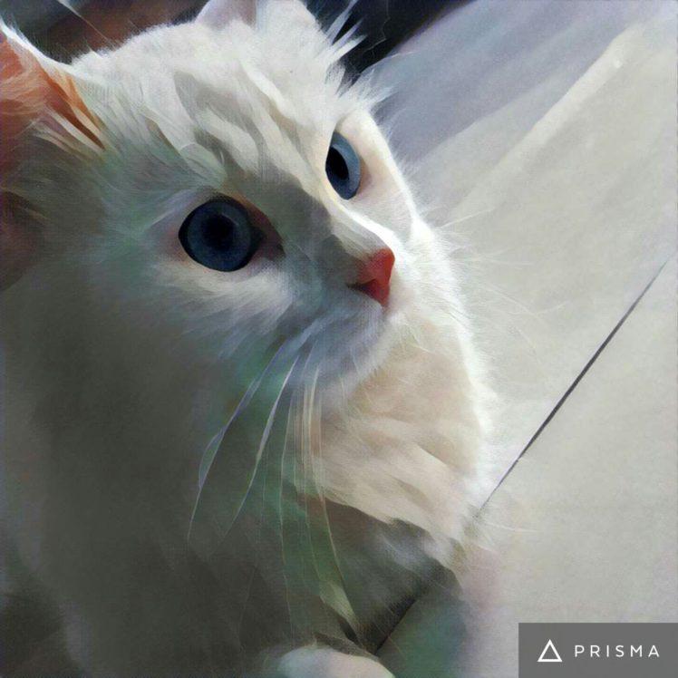 Lion Wallpaper Hd Free Download Lion Cat Artwork Hd Wallpapers Desktop And Mobile