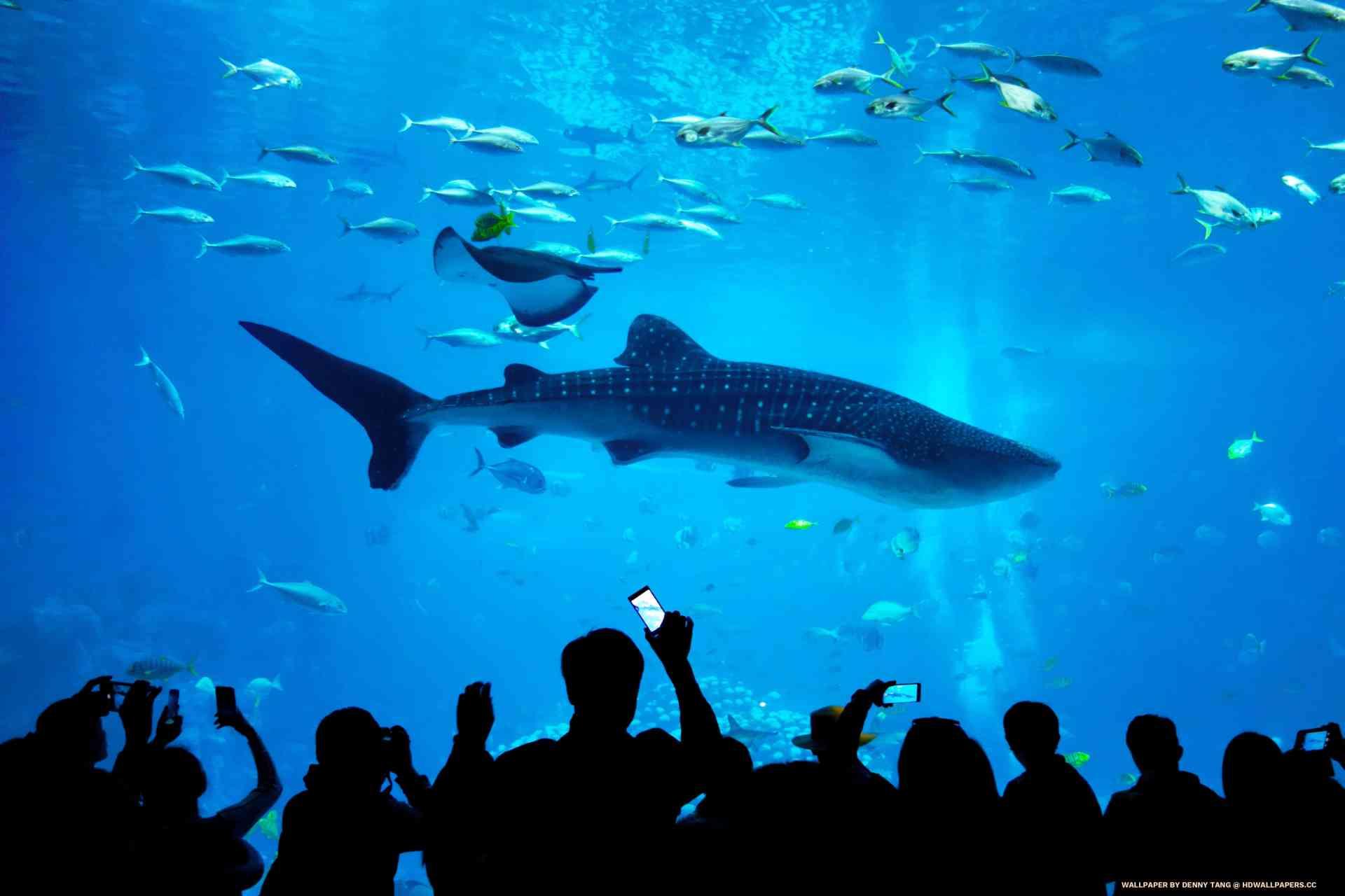 Whale Shark Aquarium