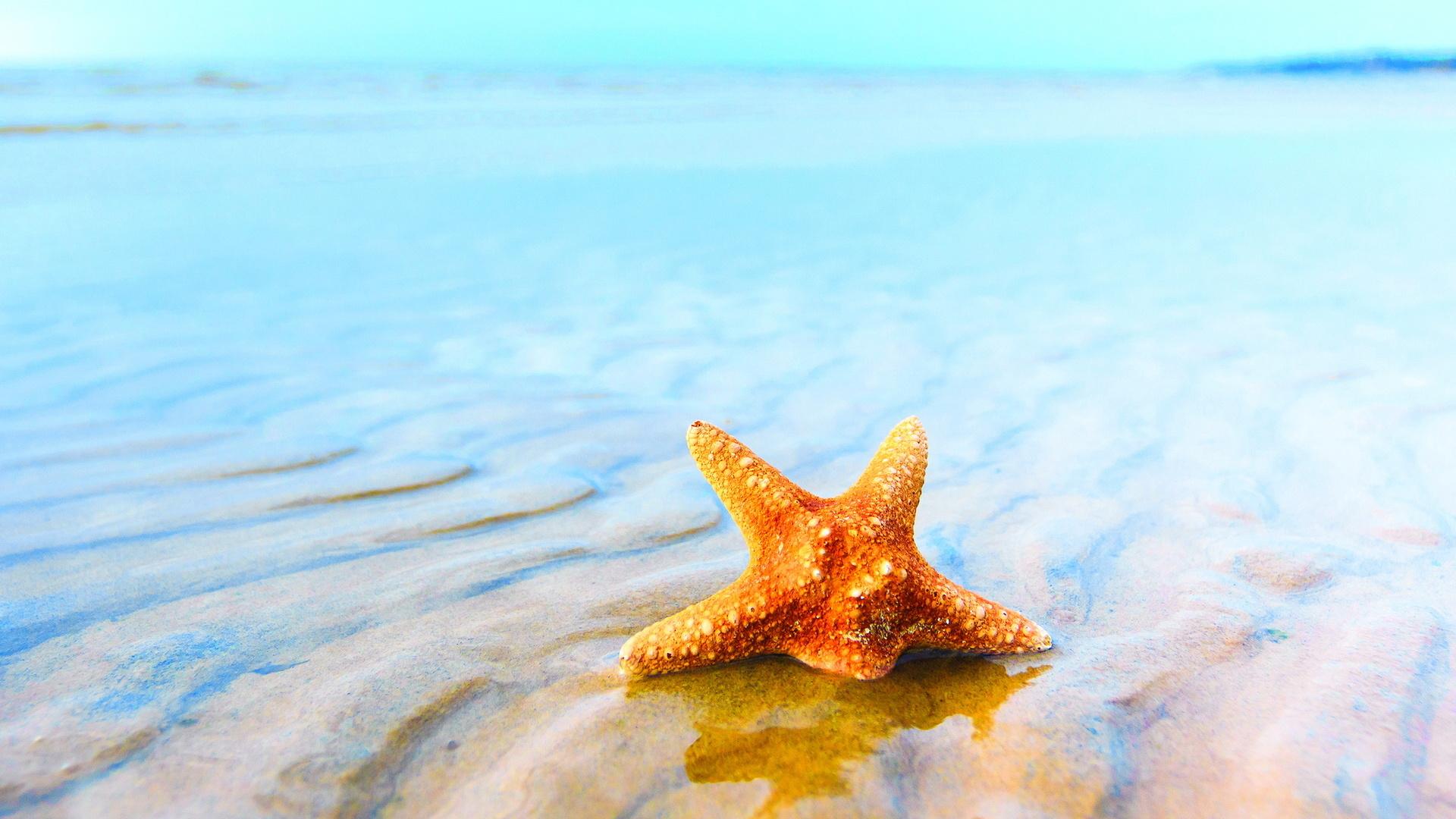 wonderful starfish wallpaper 46364 1920x1080 px ~ hdwallsource
