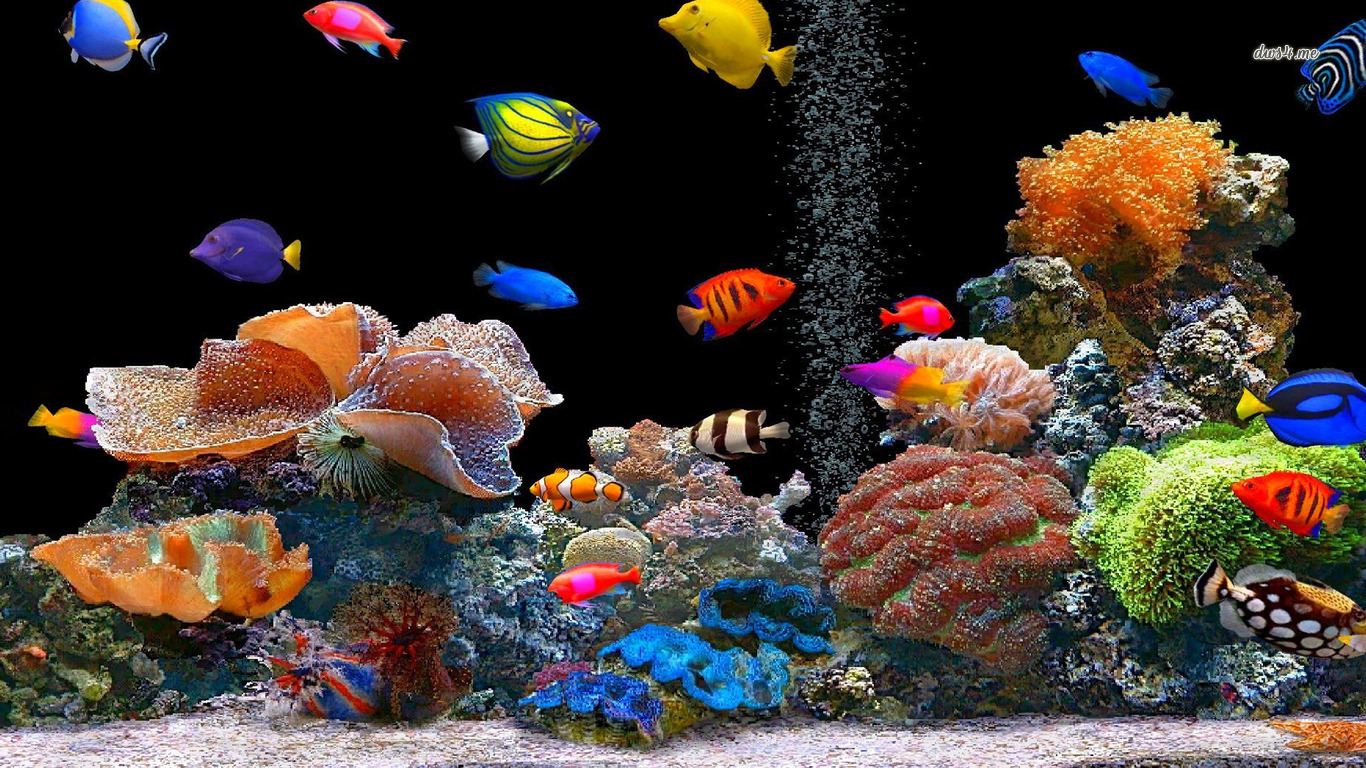 Cute Babies Hd Wallpapers 1366x768 Fish Picture 8145 Hdwpro