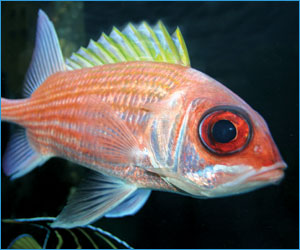best fish picture download