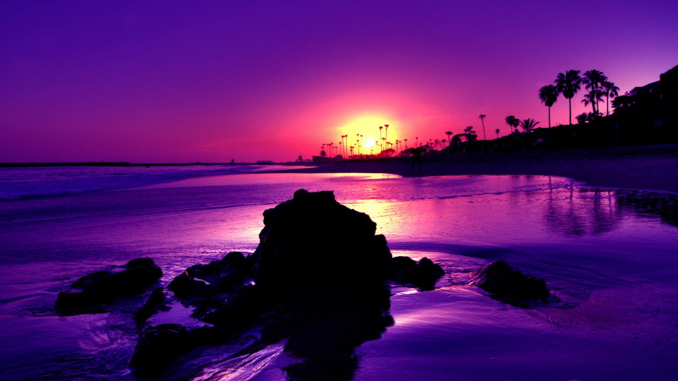 Baby Animals Hd Wallpapers Purple Beach Background 10797 Hdwpro