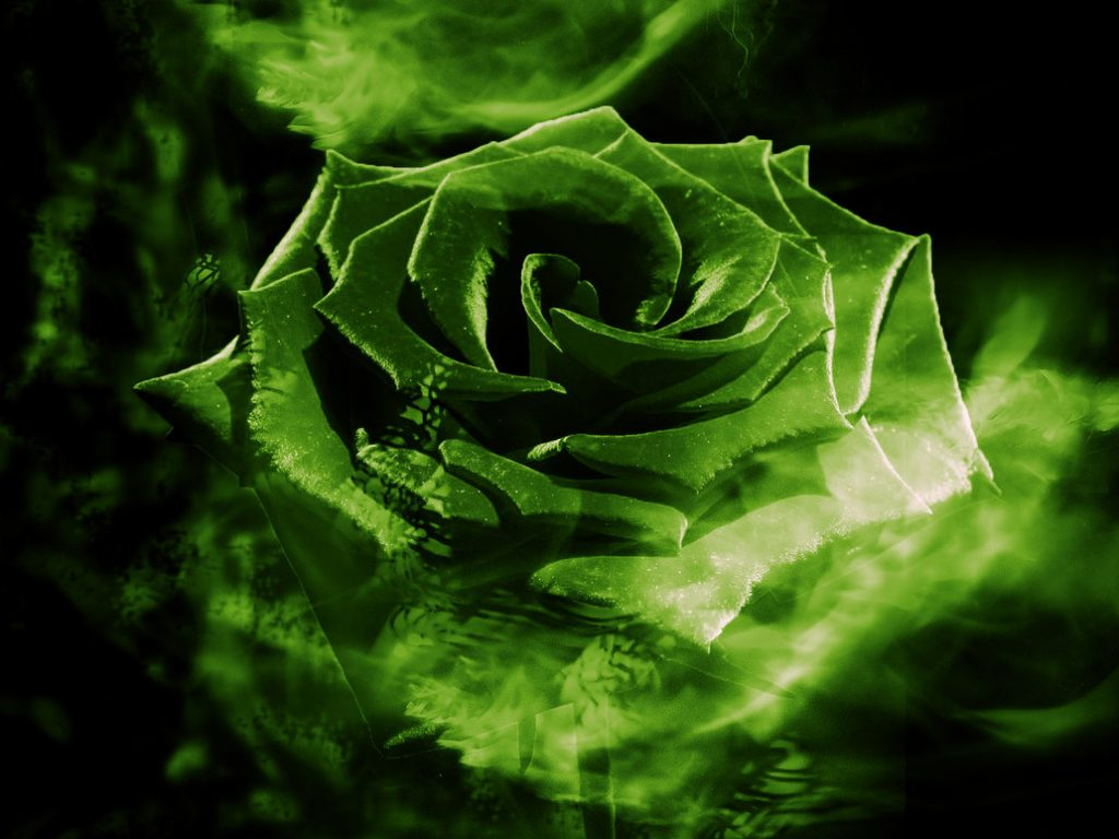 Nice Wallpapers With Quotes For Facebook Green Rose Hd Abstract Green Rose Hd 11742