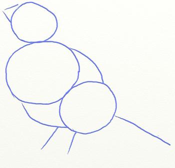 কিভাবে রোয়ান শাখা পর্যায়ে একটি bullfiner আঁকা: পেন্সিল এবং পেইন্টস