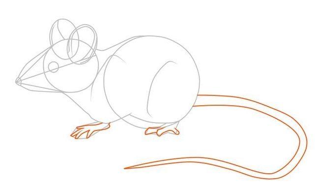 Картинки как рисовать мышь поэтапно неудивительно