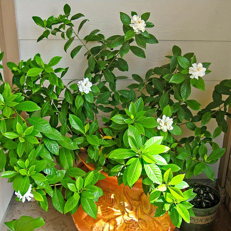 Festliche & Party Supplies Haus & Garten Künstliche Orchidee Blume Anordnung Bonsai Blume Nur Keine Vase Krankheiten Zu Verhindern Und Zu Heilen