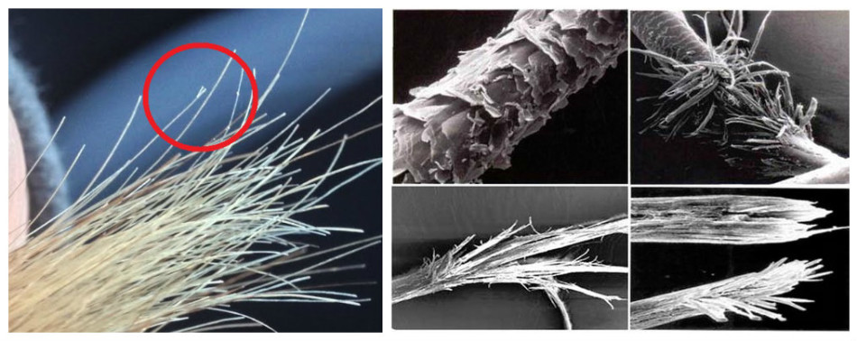 Микроскоп астындағы шашты сатыңыз