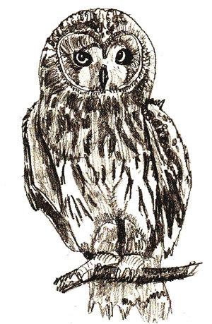 Unduh 660+  Gambar Burung Hantu Pakai Pensil  Paling Keren