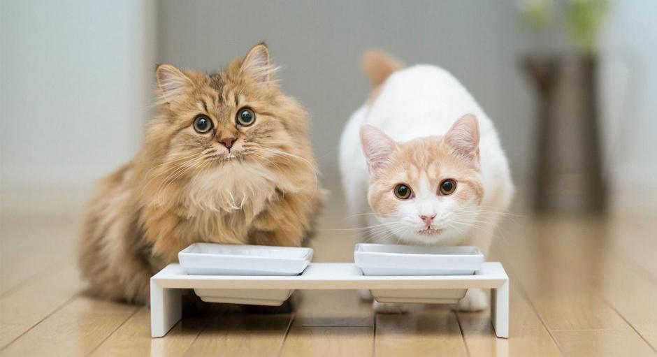 Robiť mačička striekať