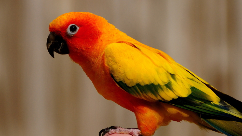 Байтрил для птиц: 10% инструкция по применению