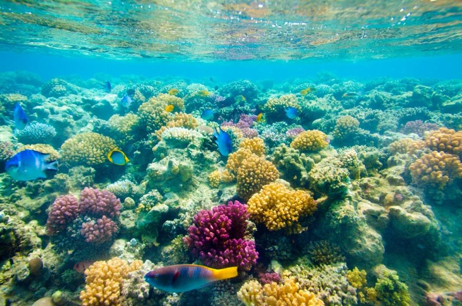 赤海の色とりどりのサンゴの分野