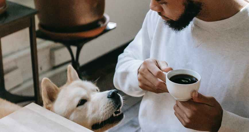 black man drinking coffee during breakfast and looking at akita inu