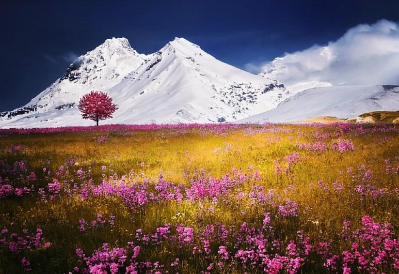 Historia jak z bajki - góry Alpy - różowe kwiaty