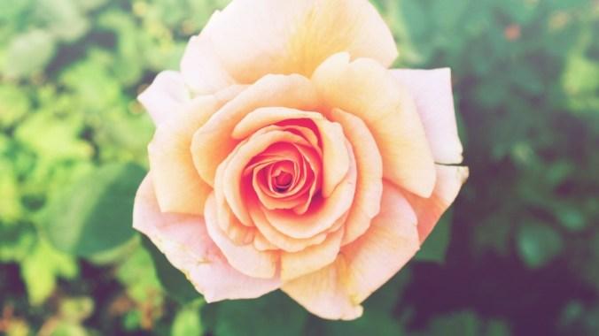 """róża - świat bez kolorów w książce """"Dawca"""""""