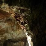 Jaskinia Postojna i Lublana – Migawki ze Słowenii #1