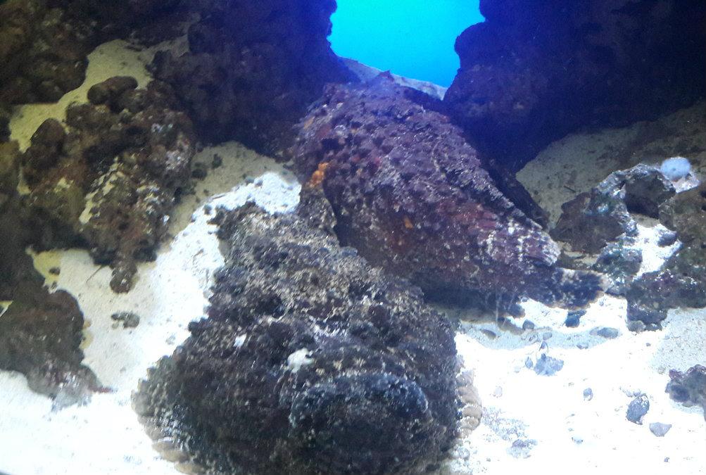 Ryby wyglądające jak kamienie - Akwarium Gdyńskie - Co warto zobaczyć w Gdyni