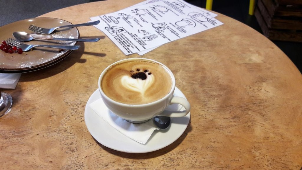 kreatywne pomysły na randkę zimą - co robić zimą - iść do kociej kawiarni
