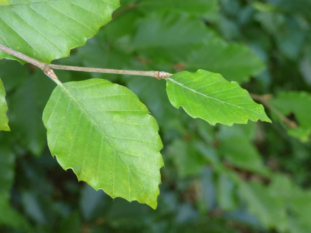 zdjęcia w trybie makro - liście