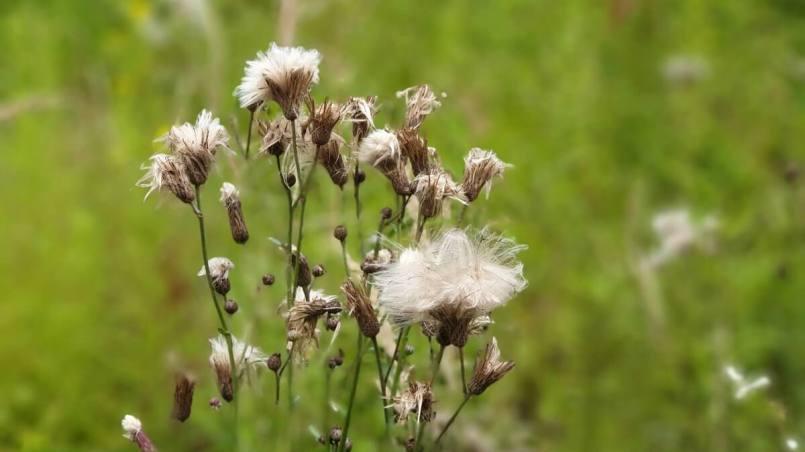 refleksje o wstawaniu wcześnie rano - zdjęcie roślin z Nota 9