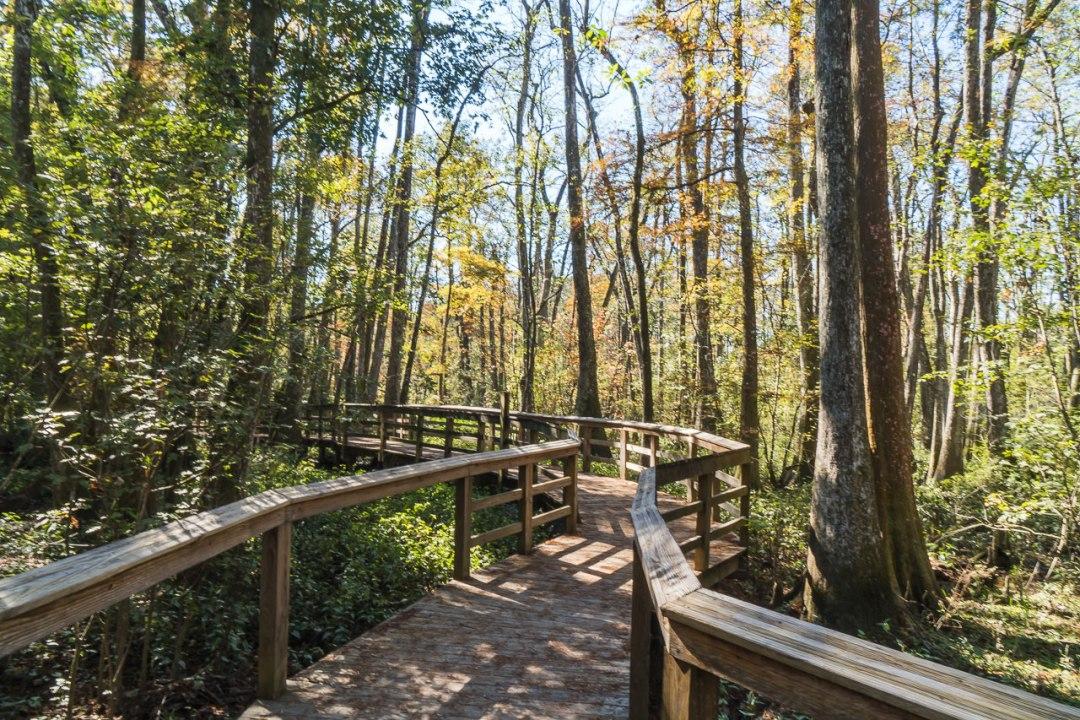 Baton Rouge Swamp Walkway