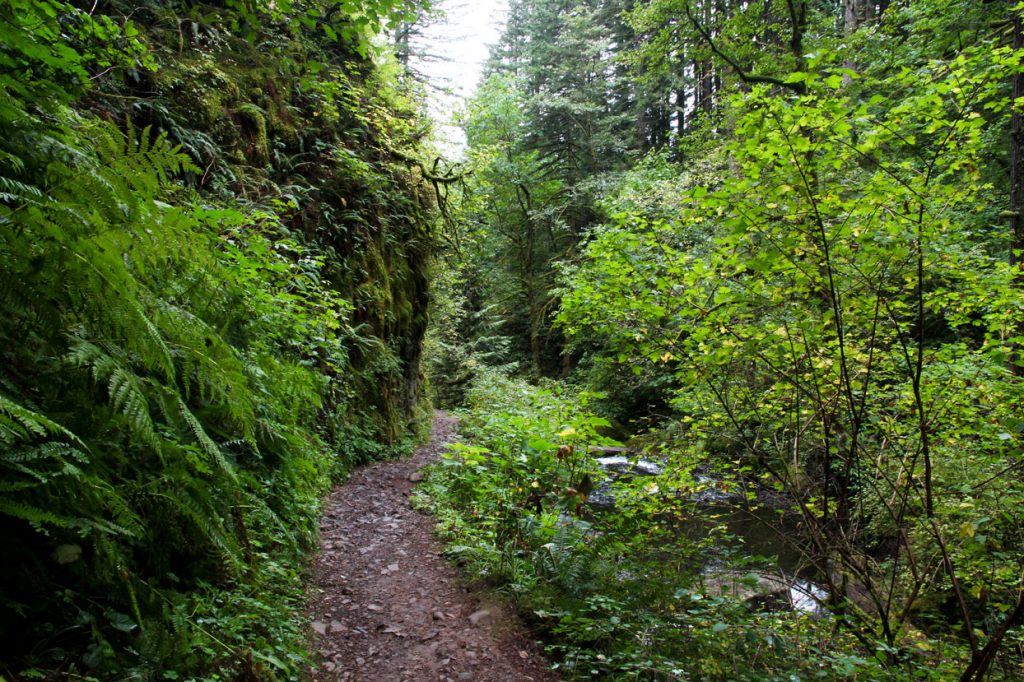 How to Make this Your Year of Adventure Hiking Multnomah Falls Loop