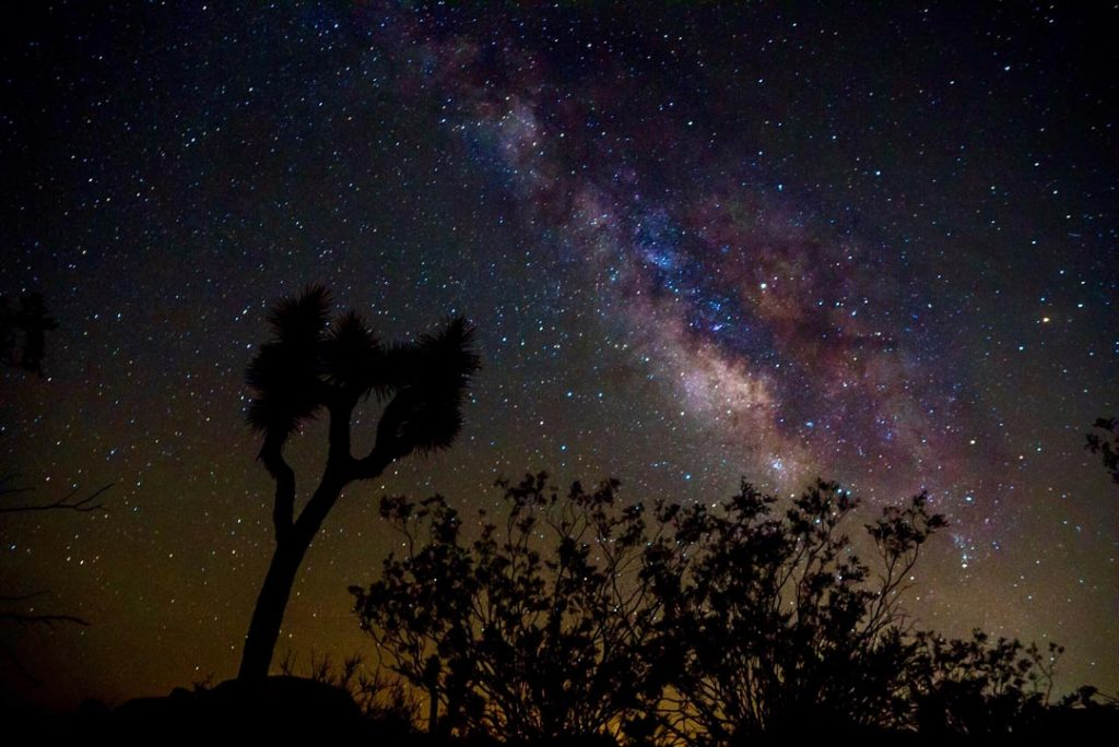 Milkyway with Joshua Tree Silhouette