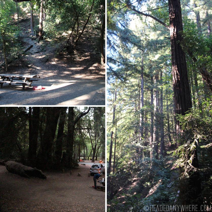 Pfeifer Big Sur CampSite Among Redwoods