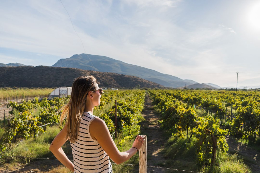 Ruta del Vino Baja California Winery
