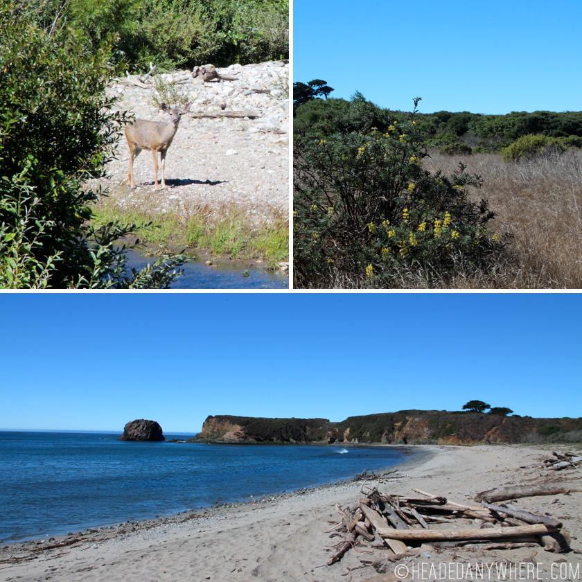 Deer, meadow and beach in Big Sur