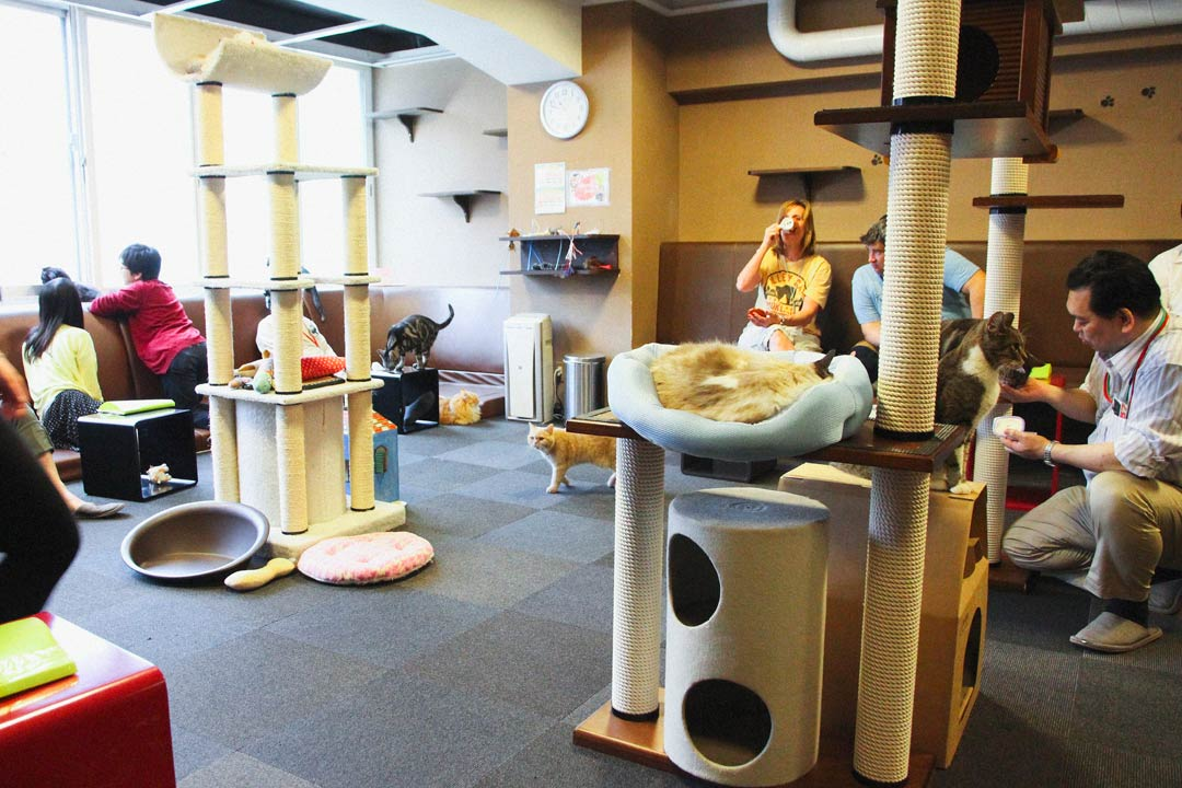 Tokyo Calico Cat Cafe