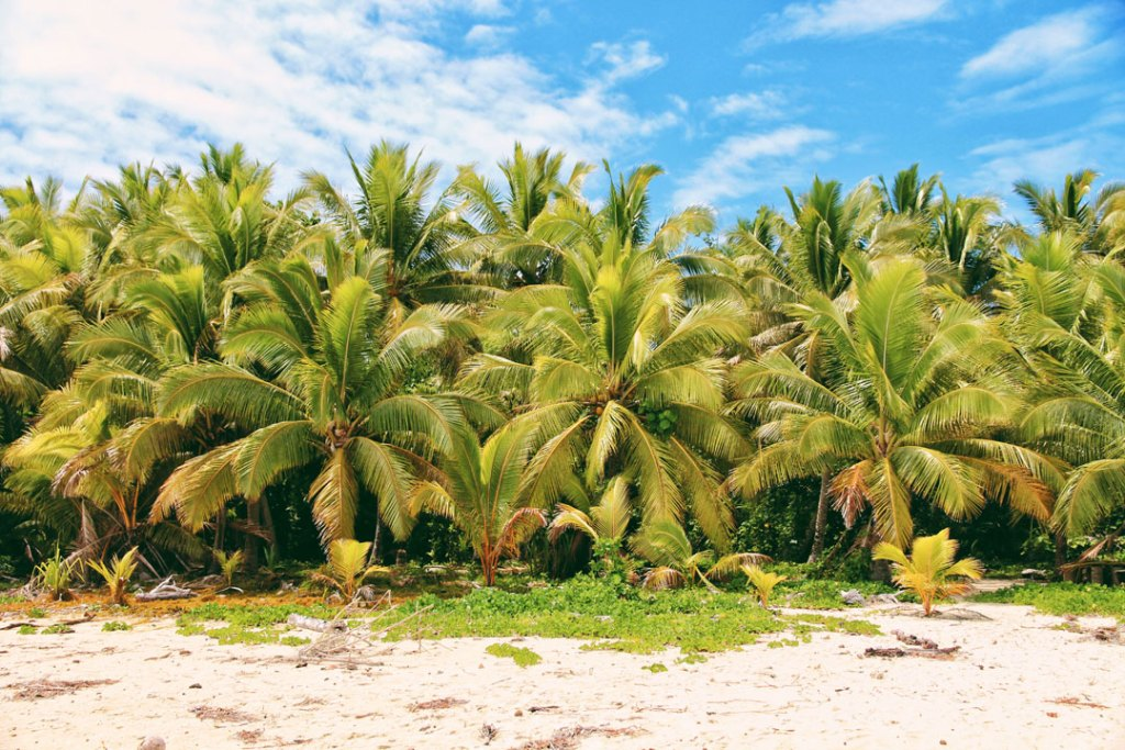 Palm trees lining beach in Aitutaki, Cook Isalnds