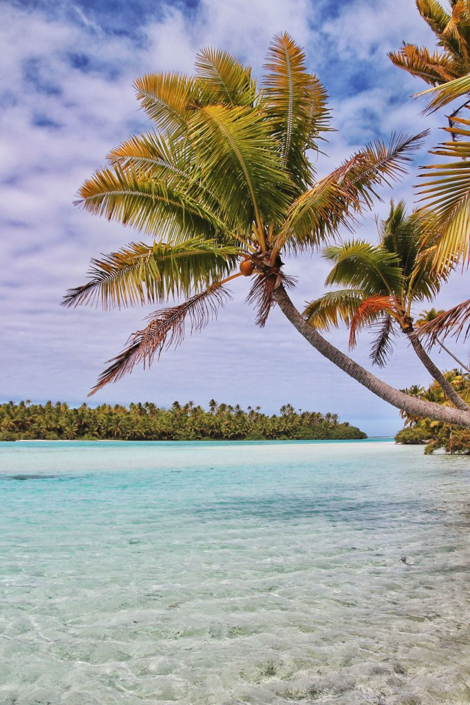 Palm Tree over lagoon on One Foot Island in Aitutaki, Cook Islands