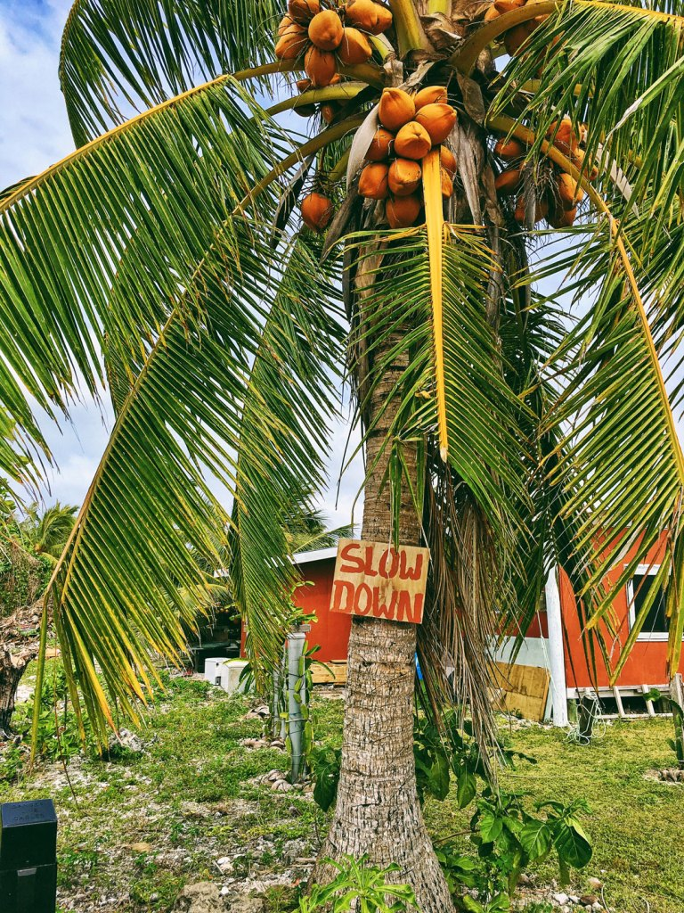 Palm tree on Aitutaki , Cook Islands with slow down sign