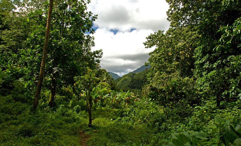 Jungle in Dominica