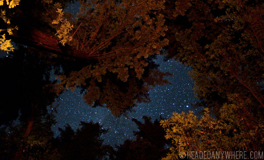 night sky through red woods pfeiffer big sur