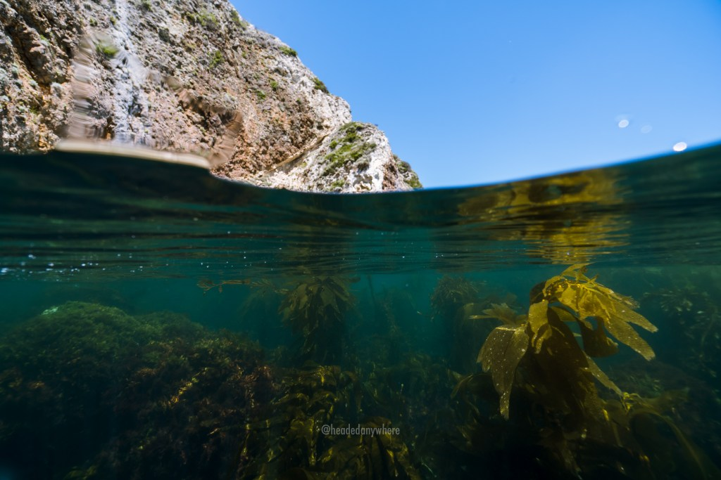Overunder water photo with kelp forest scene