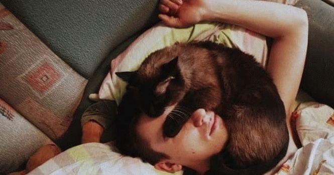 Для чего кошки ложатся спать с хозяевами причины и мнения