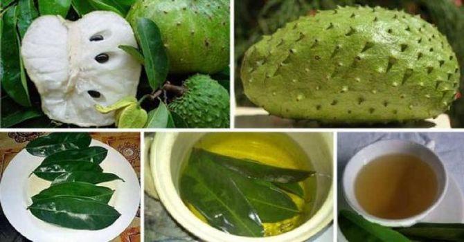 las-hojas-de-guanabana-son-1000-veces-mas-fuerte-para-matar-las-celulas-de-cancer-que-la-quimioterapia-090519602-696x364_result