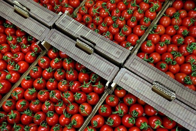 Знали ли вы о том, что обычные помидоры являются эффективным противораковым средством