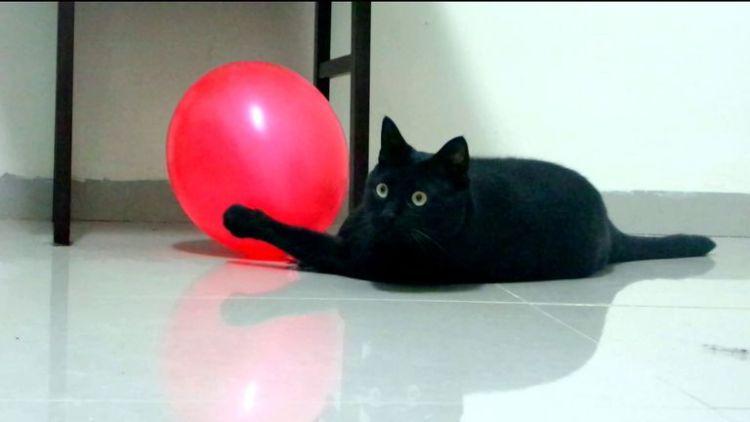 Звук лопающегося воздушного шарика может серьезно навредить вашему здоровью