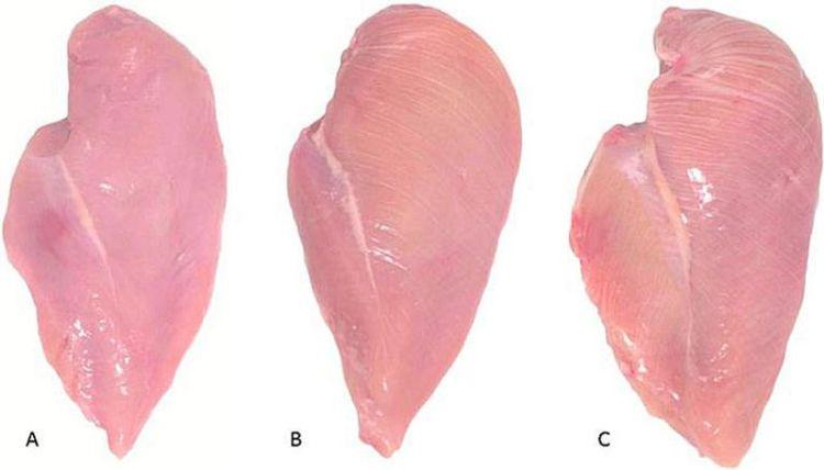 Вот что означают эти белые полоски на куриной грудке. Не покупайте такое мясо ни в коем случае!