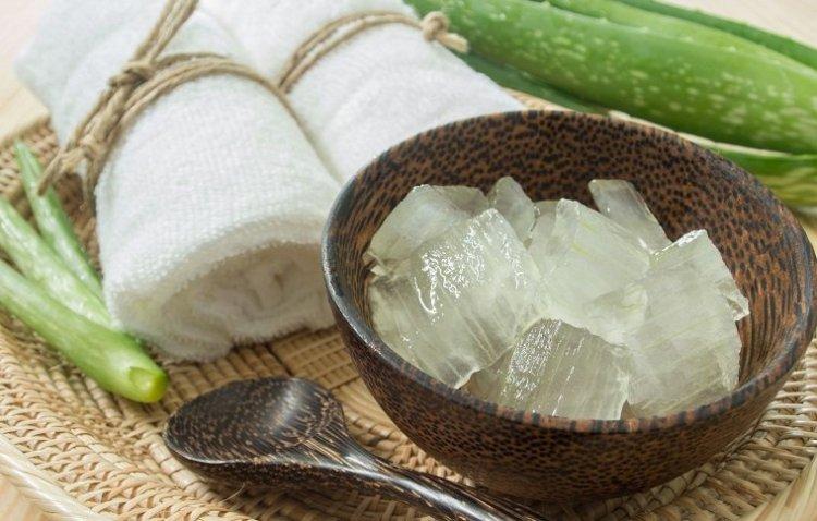 Замороженный гель алоэ вера: экономия времени и сохранность целительных свойств растения