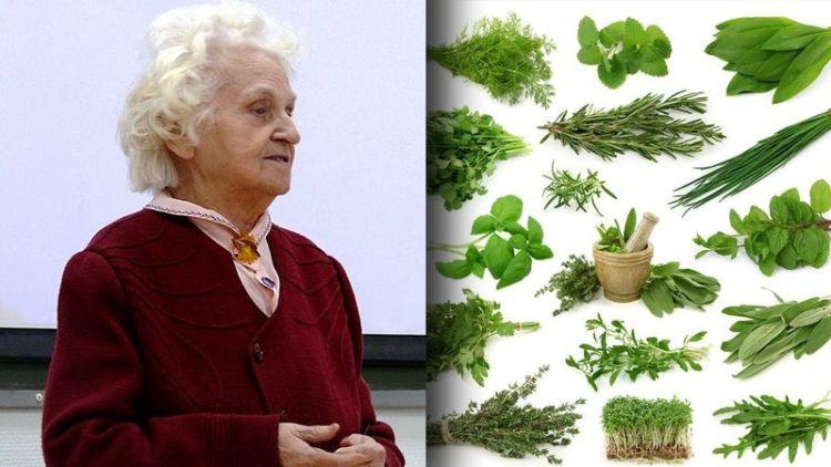 Здоровье под нашими ногами: целительные советы сибирской травницы