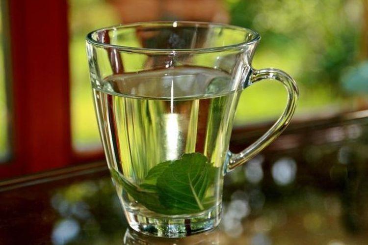 Еще один бонус для наших бабушек: любимый чай из мяты как средство улучшения памяти