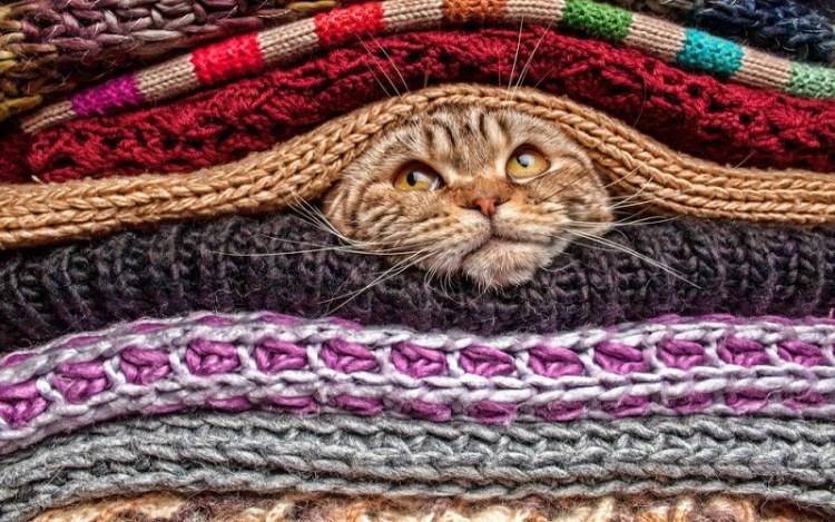 От кошки ваше сердце меньше колотит: 10 веских причин завести дома мурку
