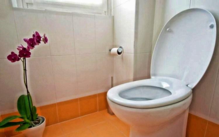 """Всему вина """"туалетный шлейф"""": почему во время смывания крышку унитаза нужно закрывать"""