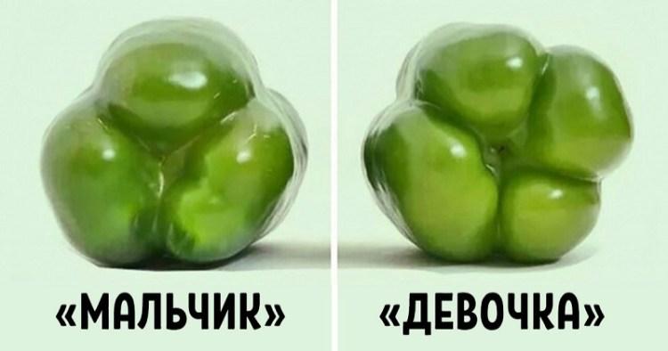 «Девочки-перчинки» более сладкие: качества болгарского перца тоже определяются его полом