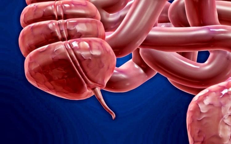 Ученые выявили новую важную роль аппендикса для здоровья человека
